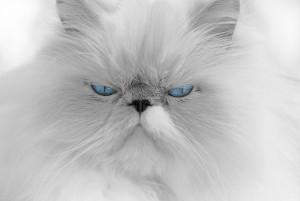 cat-676972_640